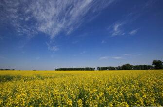 Зеленский планирует распродать украинские земли. Чем это обернется для Украины?