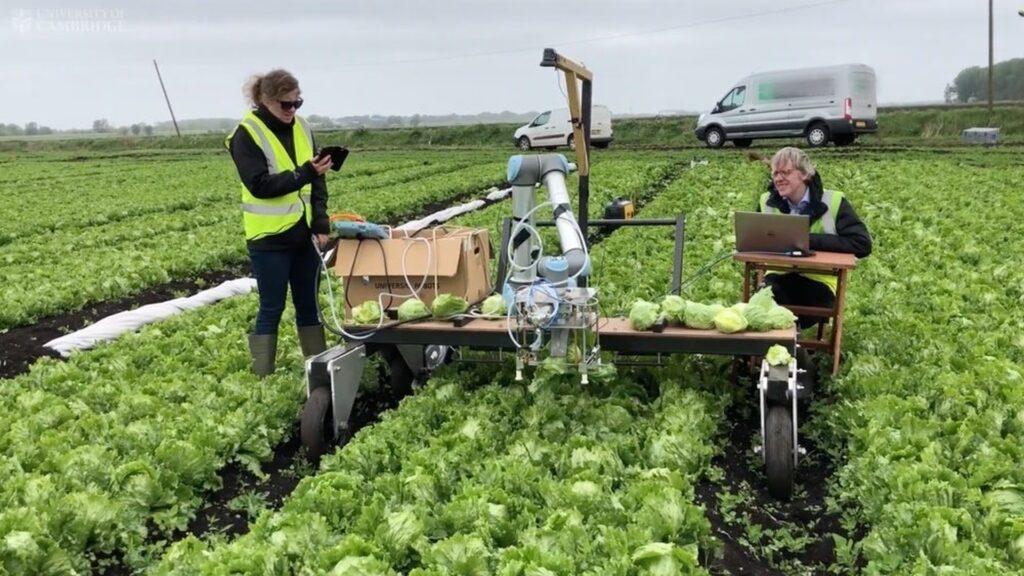 Точность и аккуратность: сельскохозяйственного робота впервые научили собирать нежный салат