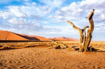 Украинская Сахара не за горами: «Незалежную» ждет холод и голод