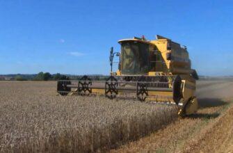 Введение Россией квоты на экспорт зерна вызвало тревогу в мире