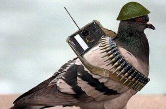 Птицы над Москвой. Животные-шпионы на службе ЦРУ