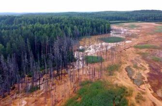 Поднявшаяся из-под земли кислота на Урале разъела все на своем пути
